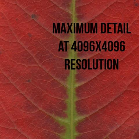 f031661b 29c8 4356 ba6d e9ccf6edf46b scaled - PBR Plant Pack Volume 2 v4.0 - Unity PBR植物3D包